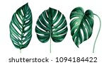 set of tropical monstera leaves ... | Shutterstock . vector #1094184422