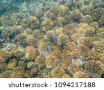 Colorful Fishes On The Coral...