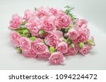 Pink Carnation Flowers With...