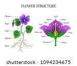 education diagram of botany and ... | Shutterstock . vector #1094234675