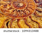 Detail of polished ammonite fossil shell with mineral cristals inside. Beautiful golden ammonite mineral texture for background close-up. Selective focus.