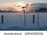 dry hogweed in winter on a... | Shutterstock . vector #1094320526