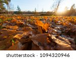 fallen trees in autumn in the... | Shutterstock . vector #1094320946