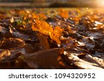 fallen trees in autumn in the... | Shutterstock . vector #1094320952