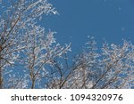 snow on branches against the... | Shutterstock . vector #1094320976