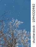 snow on branches against the... | Shutterstock . vector #1094320982