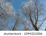 snow on branches against the... | Shutterstock . vector #1094321006
