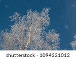 snow on branches against the... | Shutterstock . vector #1094321012