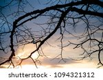 dry tree branches against the... | Shutterstock . vector #1094321312