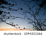 branches of young trees against ... | Shutterstock . vector #1094321366
