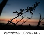 branches of plants in the... | Shutterstock . vector #1094321372