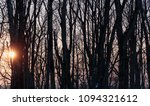 sun shines through dry trees in ... | Shutterstock . vector #1094321612
