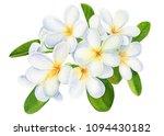 summer tropical flowers ... | Shutterstock . vector #1094430182