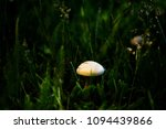 champignon mushroom grass... | Shutterstock . vector #1094439866