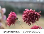flowers in full bloom | Shutterstock . vector #1094470172