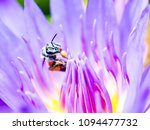 bees are looking for food on...   Shutterstock . vector #1094477732