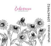 hand drawn wild flowers.... | Shutterstock .eps vector #1094479952