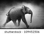 baby elephant running in dust ... | Shutterstock . vector #109452506