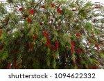 flowers of turkey. flora of...   Shutterstock . vector #1094622332