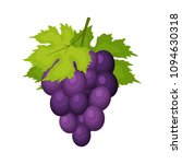 bunch of wine grapes with... | Shutterstock .eps vector #1094630318