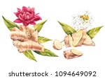 hand drawn ginger and... | Shutterstock . vector #1094649092