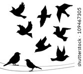Stock vector set of birds silhouettes flying sitting 109467305