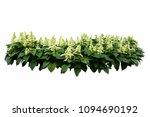 flower bush tree isolated... | Shutterstock . vector #1094690192