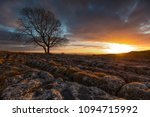 The Lone Tree At Malham During...