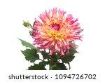 dahlia flower in several colors ...   Shutterstock . vector #1094726702