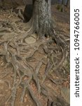 entwined tree root | Shutterstock . vector #1094766005
