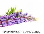 purple spring flowers on a... | Shutterstock . vector #1094776802