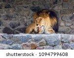 A Beautiful Lion With Big Mane...