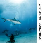 caribbean reef shark at the... | Shutterstock . vector #1094840075