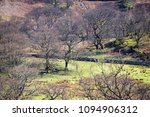 early spring stock pasture with ... | Shutterstock . vector #1094906312