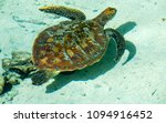 sea turtle floating in the... | Shutterstock . vector #1094916452