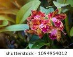 blc.waianae leopard  a nice...   Shutterstock . vector #1094954012
