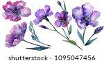 violet flax. floral botanical...   Shutterstock . vector #1095047456