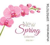 bright blooming pink purple... | Shutterstock .eps vector #1095070736