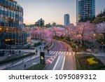 tokyo midtown during sakura...   Shutterstock . vector #1095089312