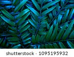 Green Leafs Of Fern With...