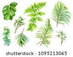 set of green leaves  fern ... | Shutterstock . vector #1095213065