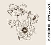 anemone flower vector drawing... | Shutterstock .eps vector #1095221705
