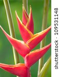 Red Heliconia Flower. Hawaii ...