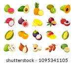 tropical exotic fruits set.... | Shutterstock .eps vector #1095341105