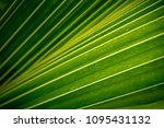 close up of green leaf texture | Shutterstock . vector #1095431132