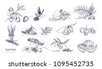 set of detailed drawings of... | Shutterstock .eps vector #1095452735
