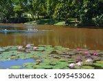 aquatic plants are plants that... | Shutterstock . vector #1095453062