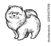 spitz pomeranian dog animal... | Shutterstock .eps vector #1095457958