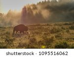 Backlit Image Of A Bison In Th...