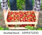 organic fruit and vegetable... | Shutterstock . vector #1095572252